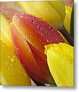 Orange And Yellow Tulips Metal Print
