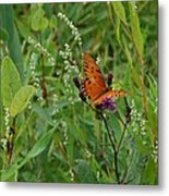Orange Butterfly Metal Print by Beverly Hammond