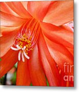 Orange Cactus Metal Print
