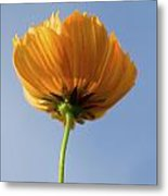 Orange Cosmos Too Metal Print