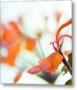 Orange Cranesbill Metal Print by David Lade