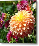 Orange Dahlia Flower Floral Fine Art Photography Metal Print by Baslee Troutman