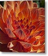 Orange Dahlia Metal Print
