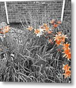 Orange Day Lilies. Metal Print by Ausra Huntington nee Paulauskaite