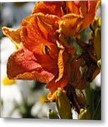 Orange Day Lilies In The Sun Metal Print