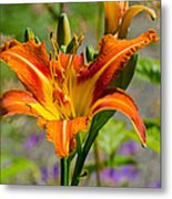 Orange Day Lily Metal Print