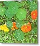 Orange Ivy Metal Print