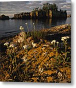 Orange Lichen-covered Rocks At Isle Metal Print