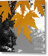 Orange Maple Leaves Metal Print