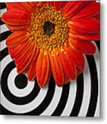Orange Mum With Circles Metal Print by Garry Gay