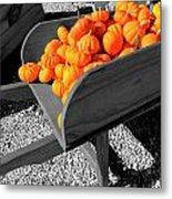 Orange Pumpkin Harvest Metal Print