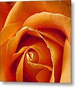 Orange Rose Close Up Metal Print by Garry Gay