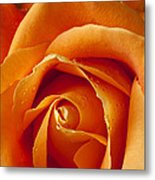 Orange Rose Close Up Metal Print