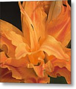 Orange Ruffles Metal Print