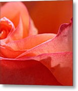 Orange Sensation Metal Print