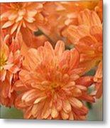 Orange Sherbert Metal Print