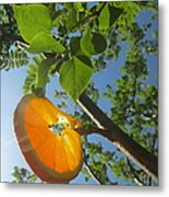 Orange Slice Metal Print