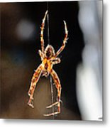 Orange Spider Metal Print