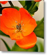Orange Star   Metal Print