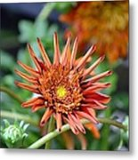 Orange Starburst Metal Print