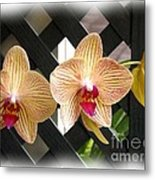 Orange Striped Orchids Metal Print