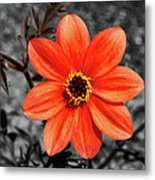 Orange Sunshine Metal Print