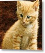 Orange Tabby Mixed Breed Kitten  Metal Print