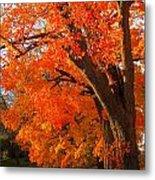 Orange Tree Metal Print