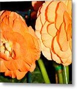 Orange Tuberous Begonias Metal Print