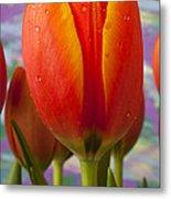 Orange Tulip Close Up Metal Print