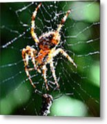 Orb Weaver And Lunch Metal Print