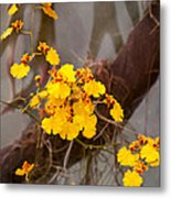 Orchid - Golden Morning  Metal Print