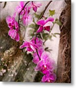 Orchid - Tropical Passion Metal Print