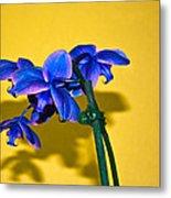 Orchid #1 Metal Print by David Alexander