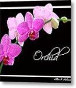 Orchid 2 2 Metal Print