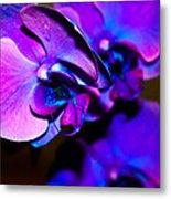 Orchid #2 Metal Print by David Alexander