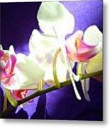 Orchid 3 Metal Print