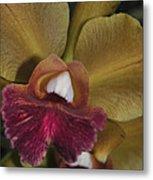 Orchid 85 Metal Print