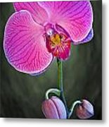 Orchid And Buds Metal Print