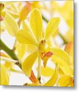 Orchid Bunch Metal Print