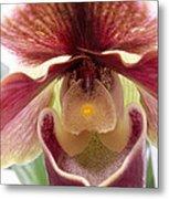 Orchid Interior Metal Print