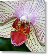Orchid Close Up Metal Print
