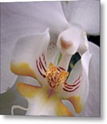Orchid Close Up Two Metal Print