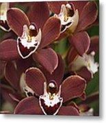 Orchid (cymbidium Sp.) Metal Print