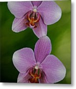 Orchid Delight Metal Print by Adele Moscaritolo