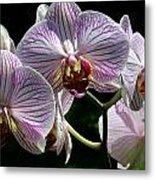Orchid Flower Blooms Metal Print
