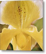 Orchid Flower Metal Print by Cristina Pedrazzini