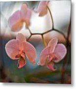 Orchid Gathering Metal Print
