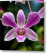 Orchid In Kandy Metal Print