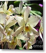 Orchid Iwanagara 9854 Metal Print